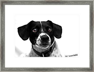 Hdr Dog The Wallace Framed Print by Scwertal Evans