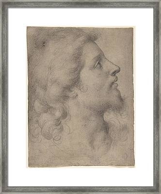 Head Of A Bearded Young Man Framed Print by Celestial Images