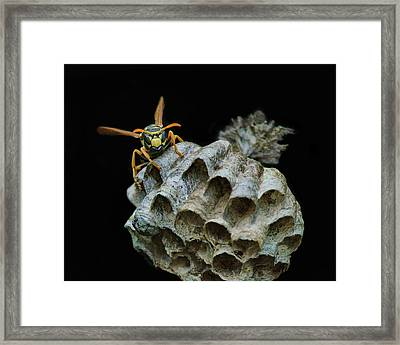 Head-on - Paper Wasp - Nest Framed Print by Nikolyn McDonald