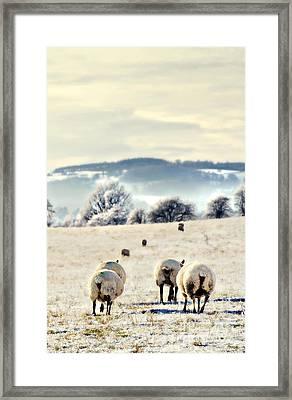 Heading Home Framed Print by Meirion Matthias