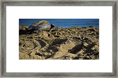 Heading Home Framed Print by Sarita Rampersad