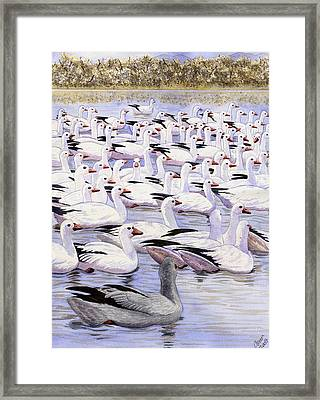 Heading North Framed Print by Catherine G McElroy