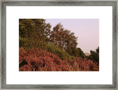 Heather And Trees On Hednesford Hills Framed Print by Adrian Wale