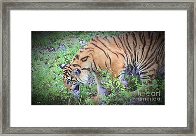 Heaven Scent Framed Print by Judy Kay