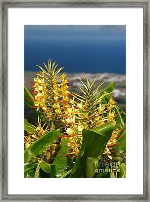 Hedychium Gardnerianum Framed Print by Gaspar Avila