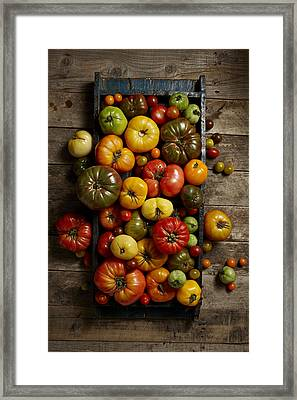 Heirloom Tomatoes Framed Print by Lew Robertson