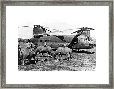Helicopters And Water Buffalos Framed Print by Underwood Archives