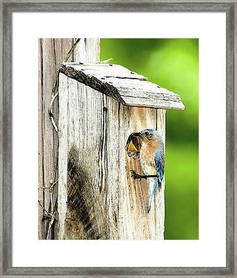 Hello Baby Framed Print by Betty LaRue