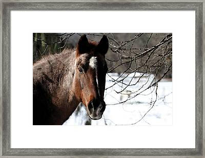 Hello Gorgeous Framed Print by Holly Ethan