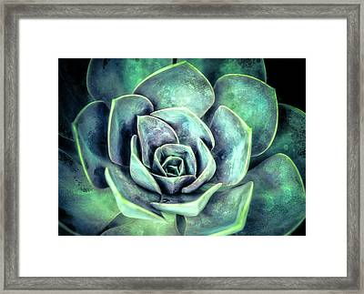 Hens And Chicks Two Framed Print by Julie Palencia
