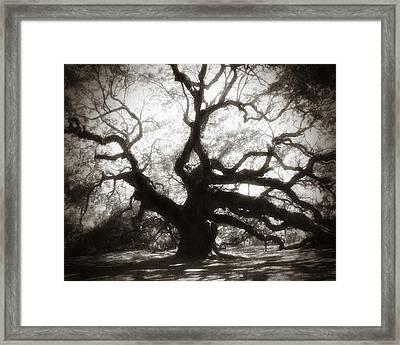 Her Majesty Framed Print by Amy Tyler
