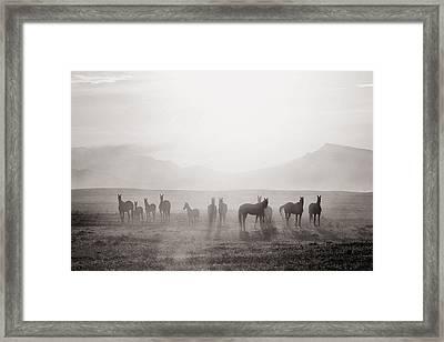 Herd #3 Framed Print by Artur Baboev