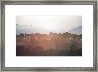 Herd #34 Framed Print by Artur Baboev
