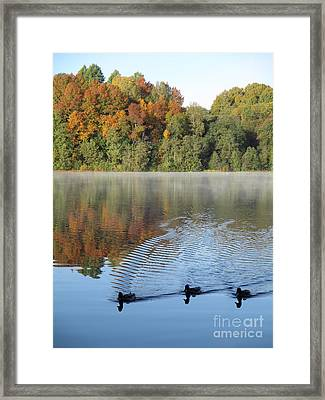 Here Come The Ducks Framed Print by Martin Howard