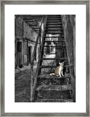 Here Kitty Kitty Kitty... Framed Print by Evelina Kremsdorf
