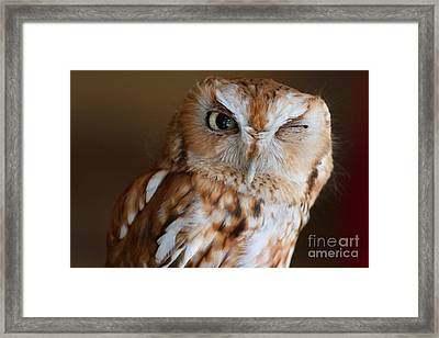 Here's Looking At You Framed Print by A New Focus Photography