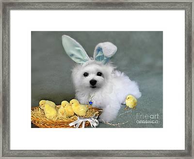 Hermes At Easter Framed Print by Morag Bates