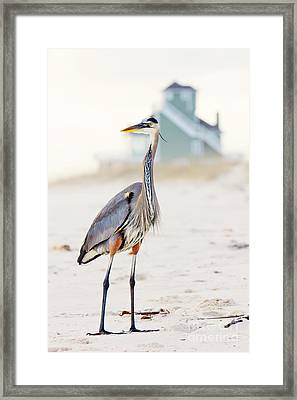 Heron And The Beach House Framed Print by Joan McCool