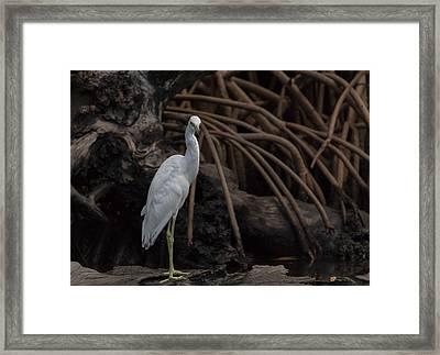 Heron In Disguise Framed Print by Debra Larabee