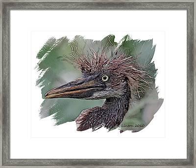 Heron Nestling Framed Print by Larry Linton