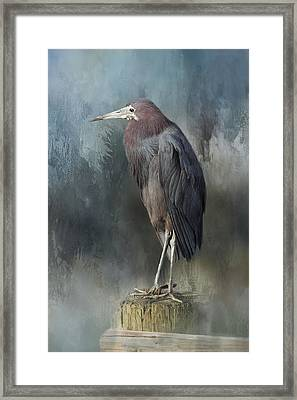Heron Profile Framed Print by Kim Hojnacki