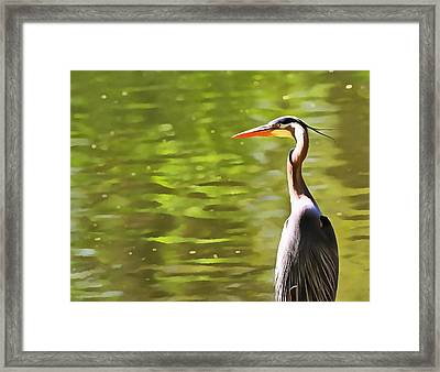 Heron Wading And Waiting Framed Print by Dan Sproul