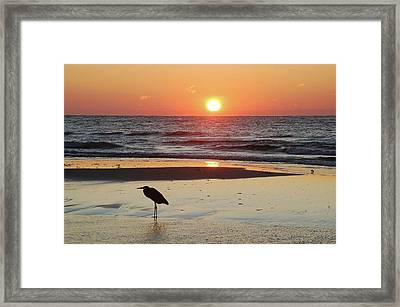 Heron Watching Sunrise Framed Print by Michael Thomas