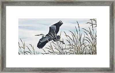 Herons Flight Framed Print by James Williamson