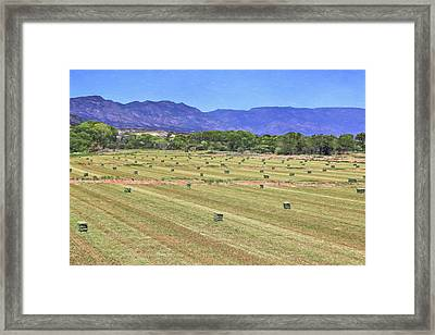 Hey Hay Framed Print by Donna Kennedy