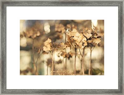 Hibernating Beautifully Framed Print by Lisa Knechtel