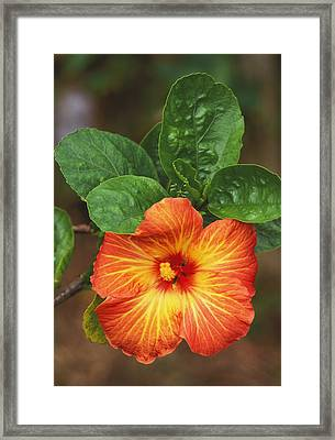 Hibiscus Framed Print by Allan Seiden - Printscapes