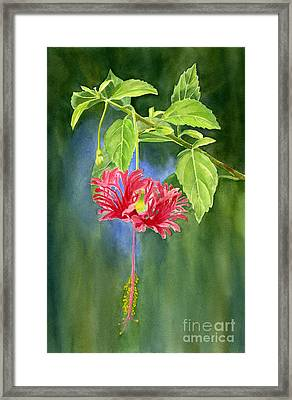 Hibiscus Chinese Red Lantern With Background Framed Print by Sharon Freeman