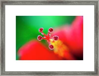 Hibiscus Probe Framed Print by Sean Davey