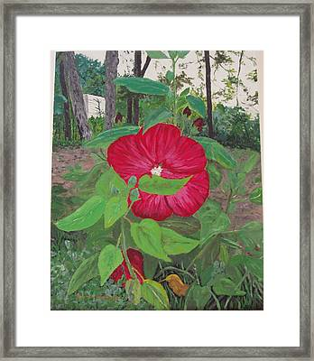 Hibiscus Framed Print by Sharon  De Vore