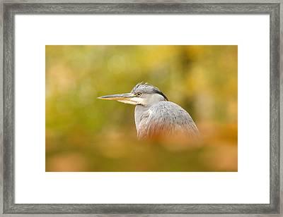 Hidden Heron Framed Print by Roeselien Raimond