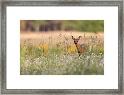 Hide And Seek Framed Print by Andy Luberti