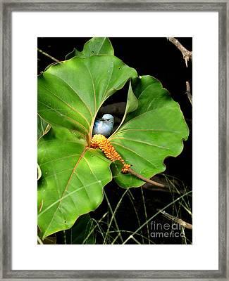 Hide And Seek Framed Print by Julian Bralley