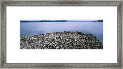 High Angle View Of Oyster Shells Framed Print by Panoramic Images
