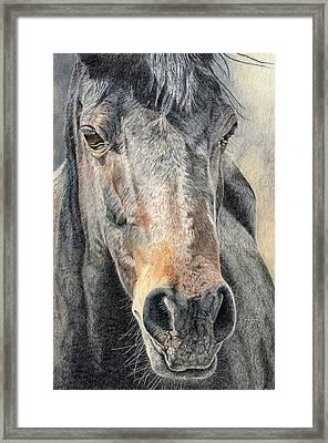 High Desert  Framed Print by Joanne Stevens