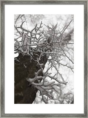 Higher Framed Print by Gabriela Insuratelu