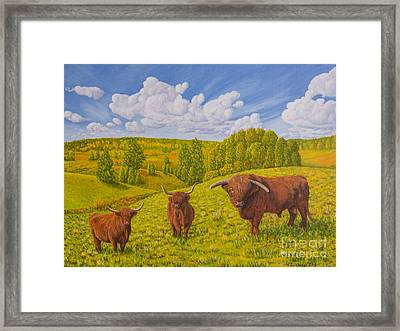 Highland Cattle Pasture Framed Print by Veikko Suikkanen