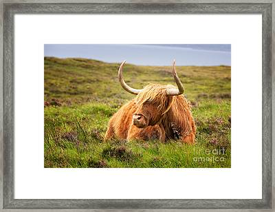 Highland Cow Framed Print by Jane Rix
