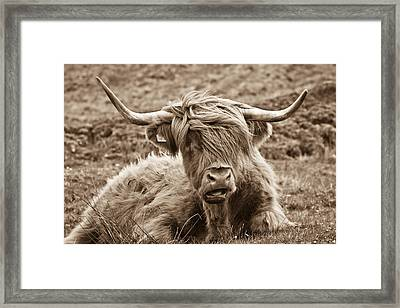 Highland Cow  Framed Print by Justin Albrecht
