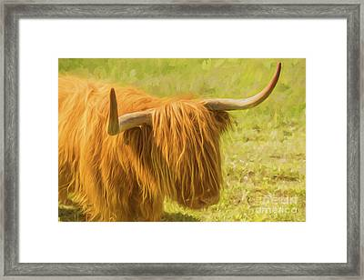 Highland Cow Framed Print by Veikko Suikkanen