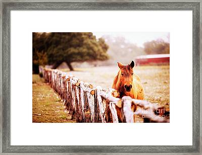 Hill Country Horse Framed Print by Katya Horner
