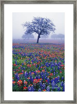 Hill Country Mist - Fs000062 Framed Print by Daniel Dempster