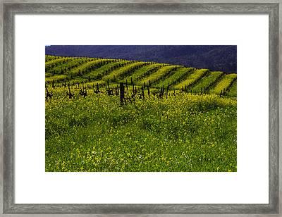 Hills Of Mustard Grass Framed Print by Garry Gay