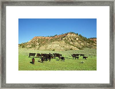 Hilly Pasture Framed Print by Todd Klassy