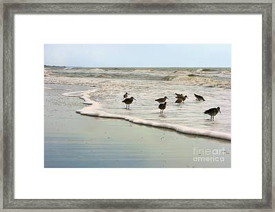 Plundering Plover Series 6 Framed Print by Angela Rath