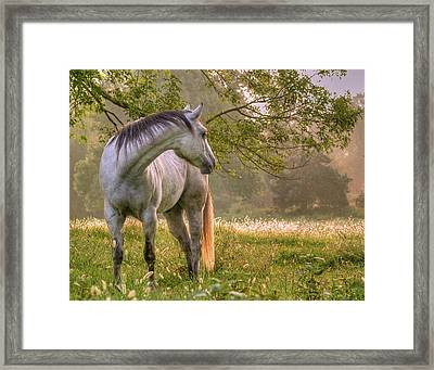 Hindsight Framed Print by Ron  McGinnis